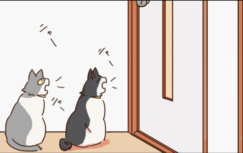 姉妹ねこ日記5
