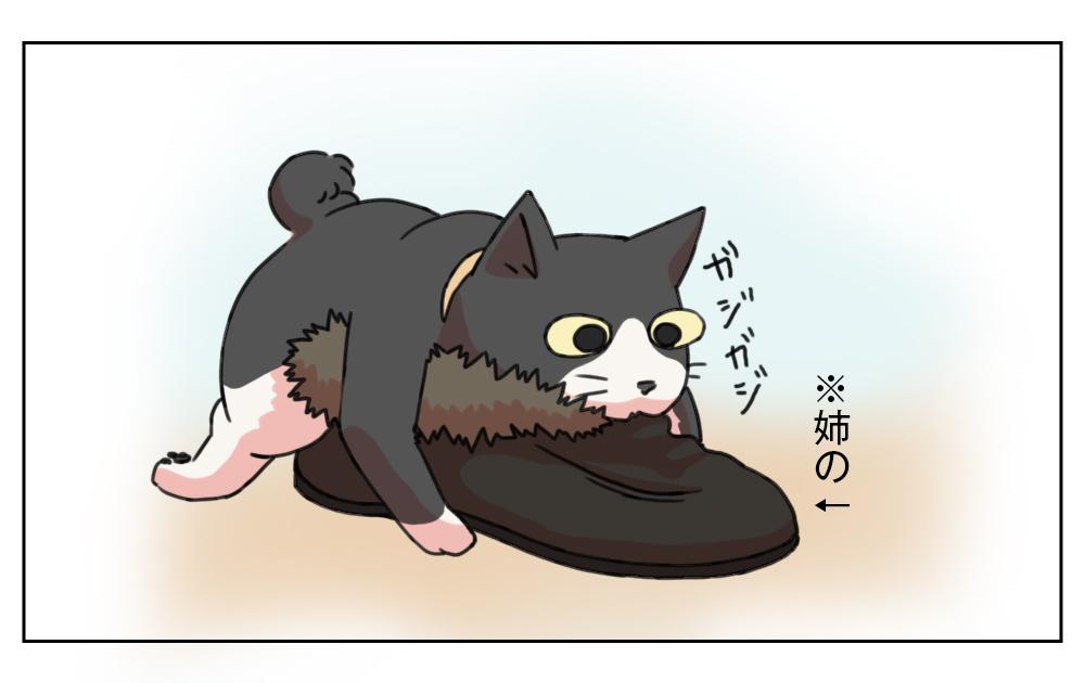 姉妹ねこ日記6