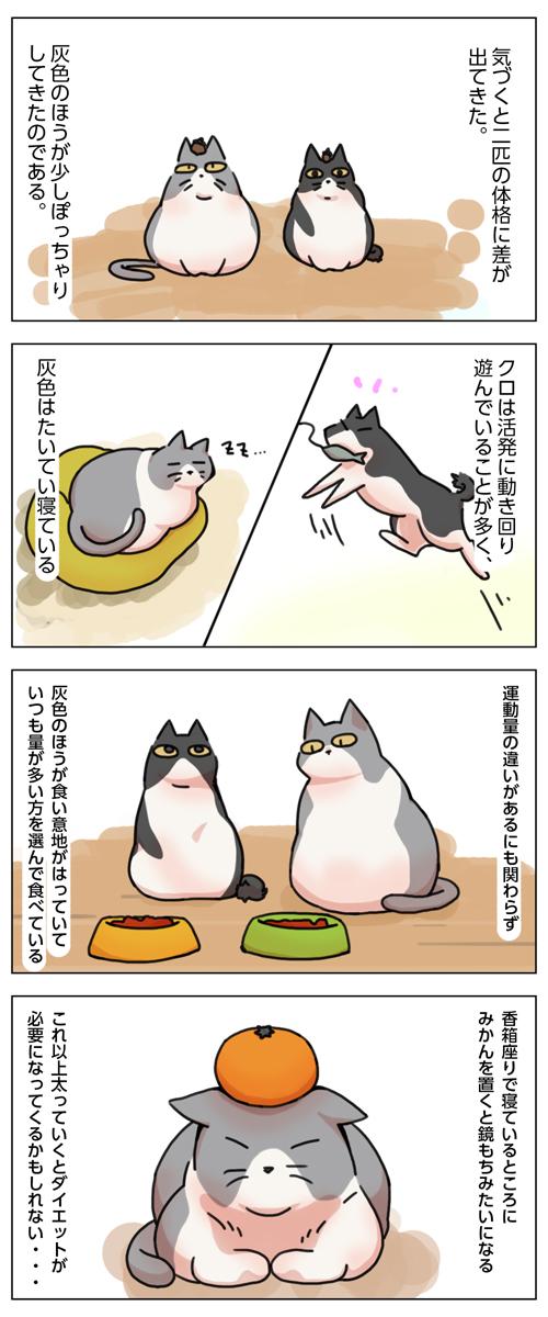 姉妹ねこ日記7