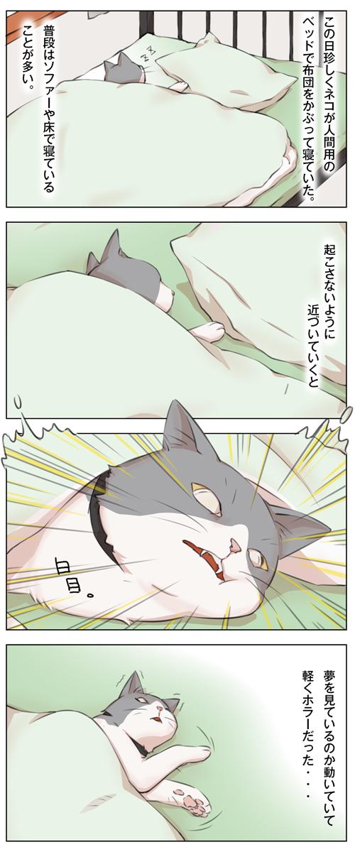 姉妹ねこ日記10