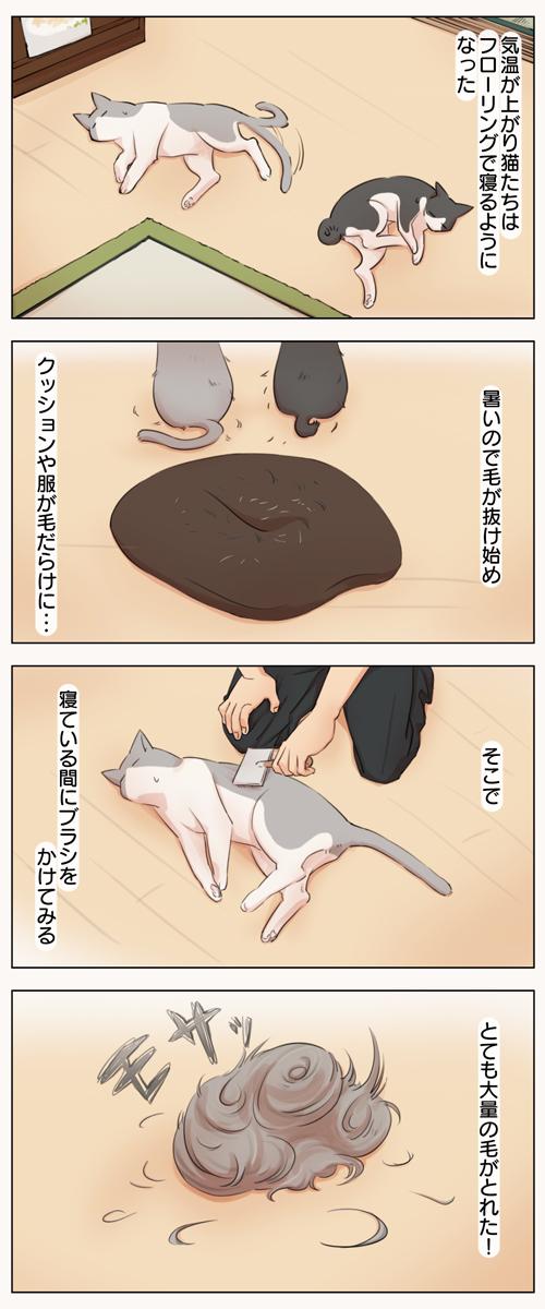 姉妹ねこ日記12